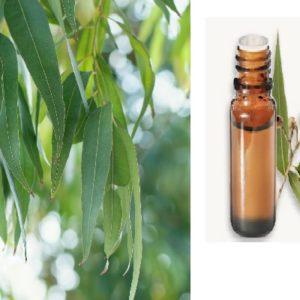 Huile essentielle Eucalyptus Globulus